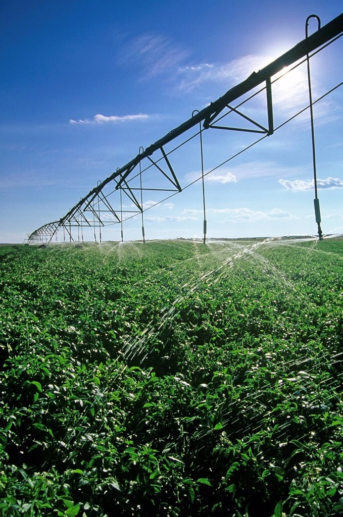 Stock Photo: 1990-53804 A center pivot irrigation system irrigates potatoes near Holland, Manitoba, Canada