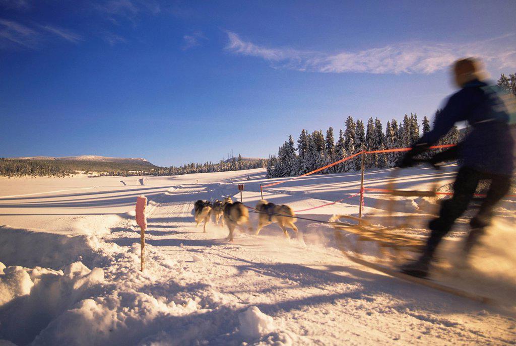 Stock Photo: 1990-54656 Sled dog racing, Houston, British Columbia, Canada.