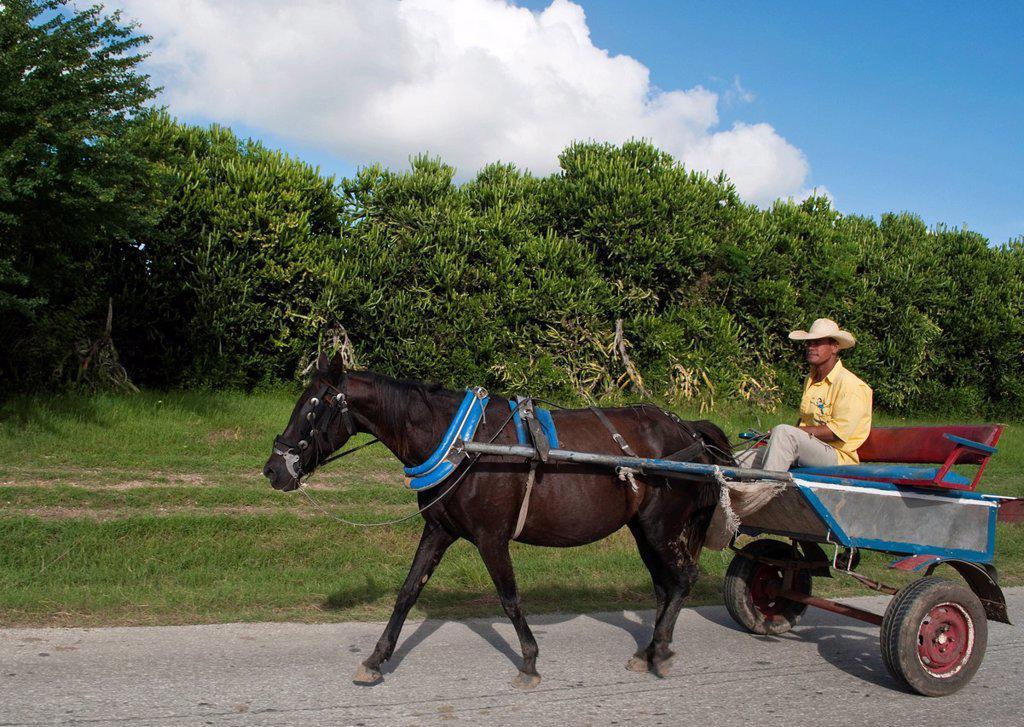 Horse powered cart in rural area near Holguin, Cuba : Stock Photo