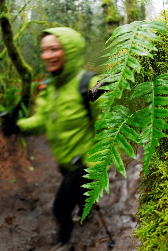 Hiking the West Canyon Trail, Pacific Spirit Regional Park, Vancouver, British Columbia, Canada : Stock Photo