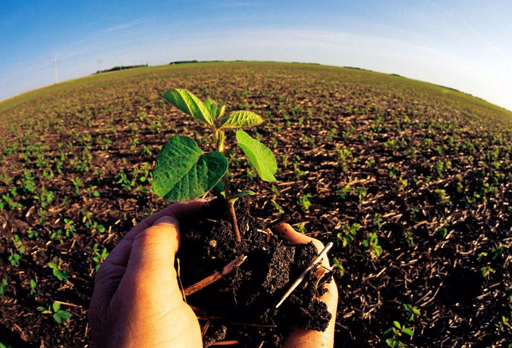 Hand holding early growth soybean plant near Dugald, Manitoba, Canada : Stock Photo
