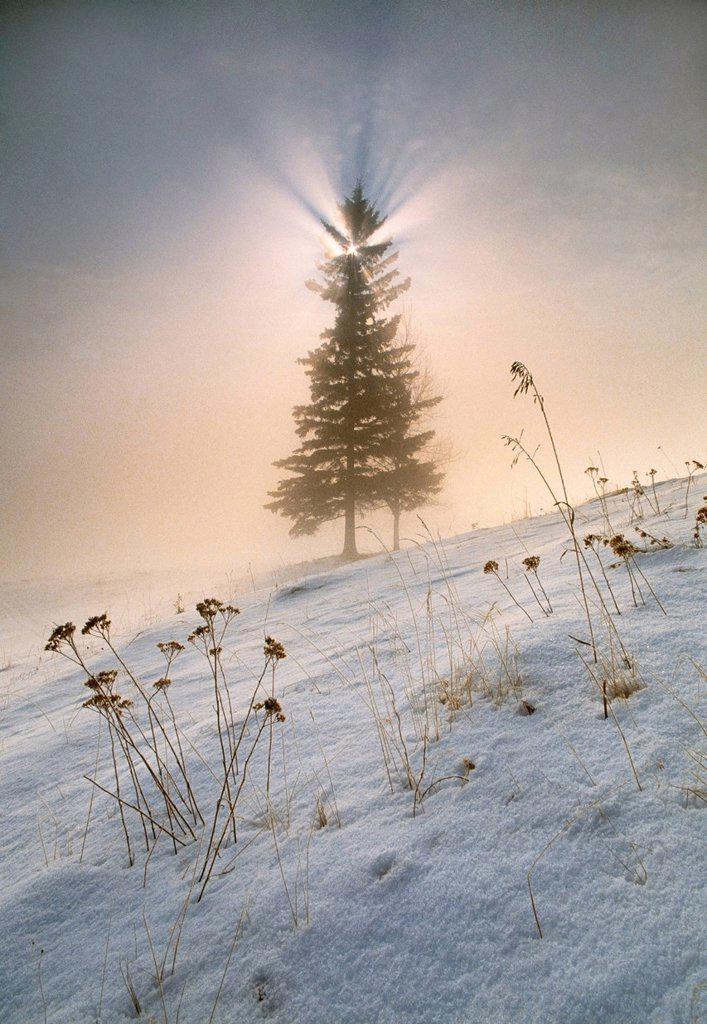 Sunrise and fog near Drayton Valley, Alberta, Canada : Stock Photo