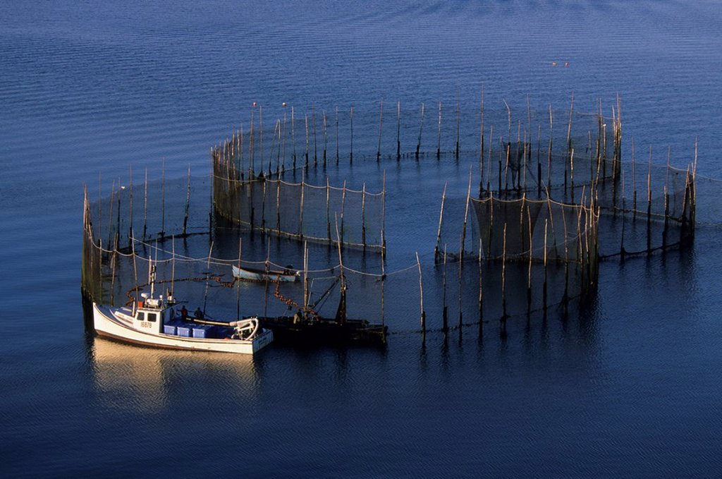 Stock Photo: 1990-5580 Cultured mussel Mytilus edulis farming, St  Peters Bay, Kings County, Prince Edward Island, Canada