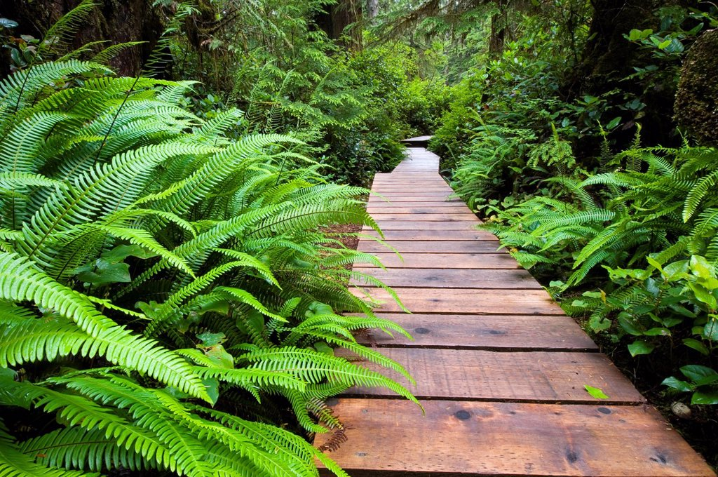 Stock Photo: 1990-56672 Rainforest trail at Pacific Rim National Park, Vancouver Island, British Columbia, Canada.