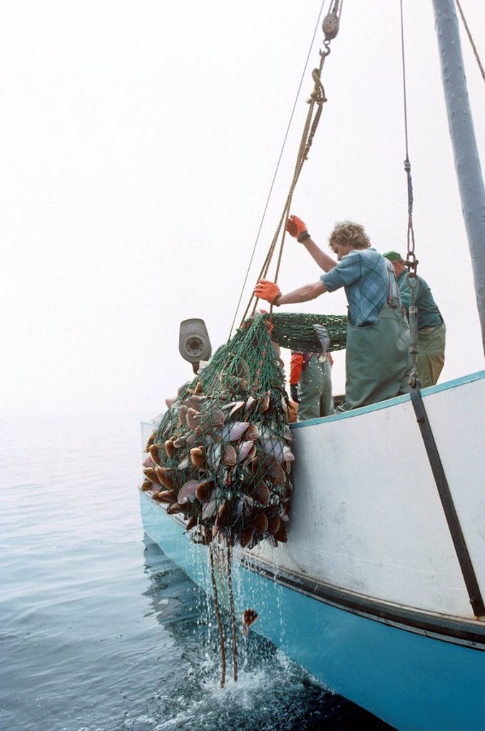 Stock Photo: 1990-5697 Fishermen Hauling in catch from Northumberland Strait, Prince Edward Island, Canada