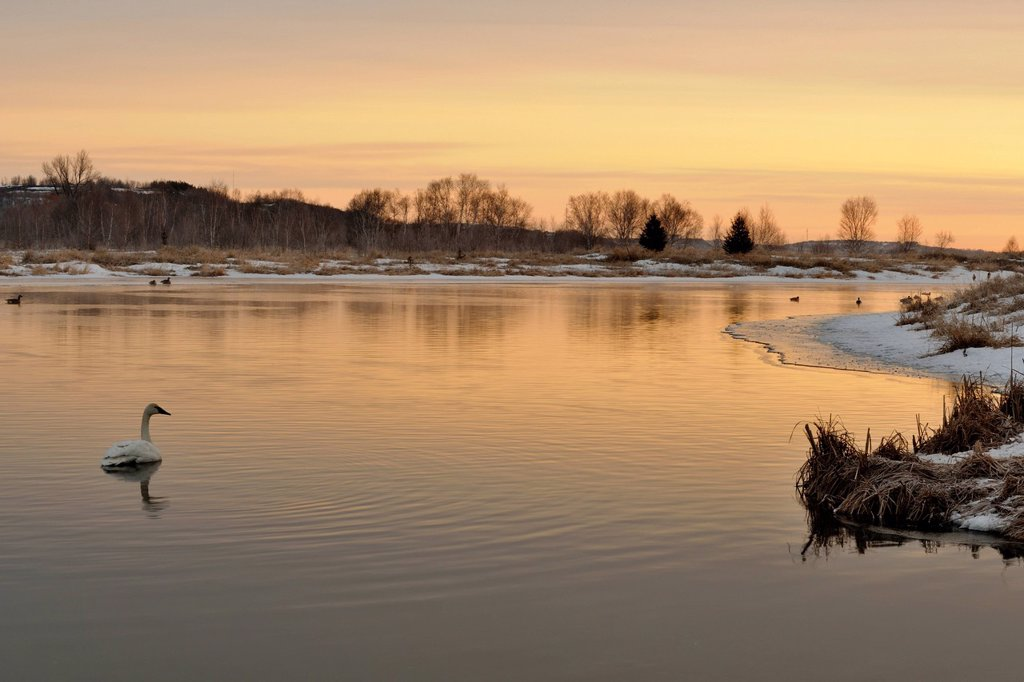 Junction Creek with waterfowl in early spring at sunrise, Greater Sudbury, Ontario, Canada : Stock Photo