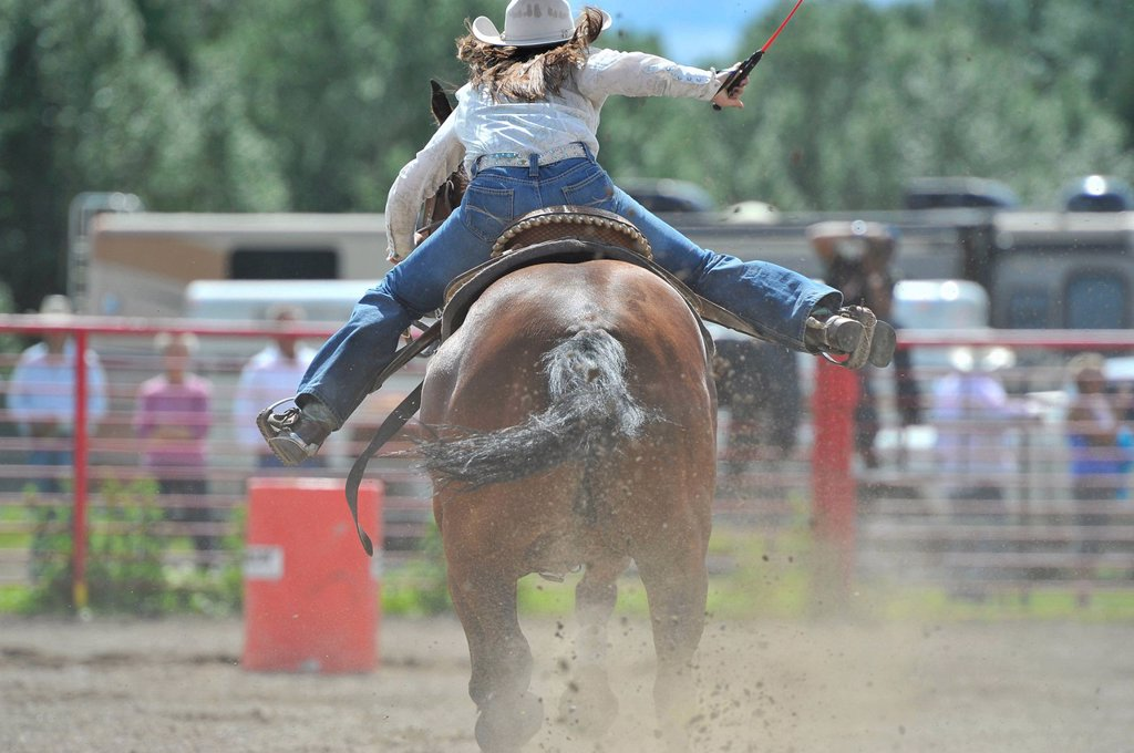 A rear view of a barrel racer dashing for that 3rd barrel, Alberta, Canada : Stock Photo