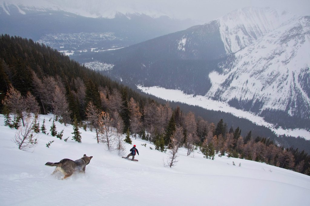A man descends a powerfield on his splitboard with his dog following, Kananaskis backcountry, near Canmore, Alberta, Canada : Stock Photo
