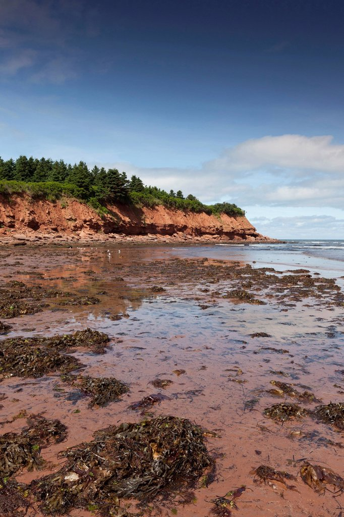 Prince Edward Island National Park, North Rustico, Prince Edward Island : Stock Photo