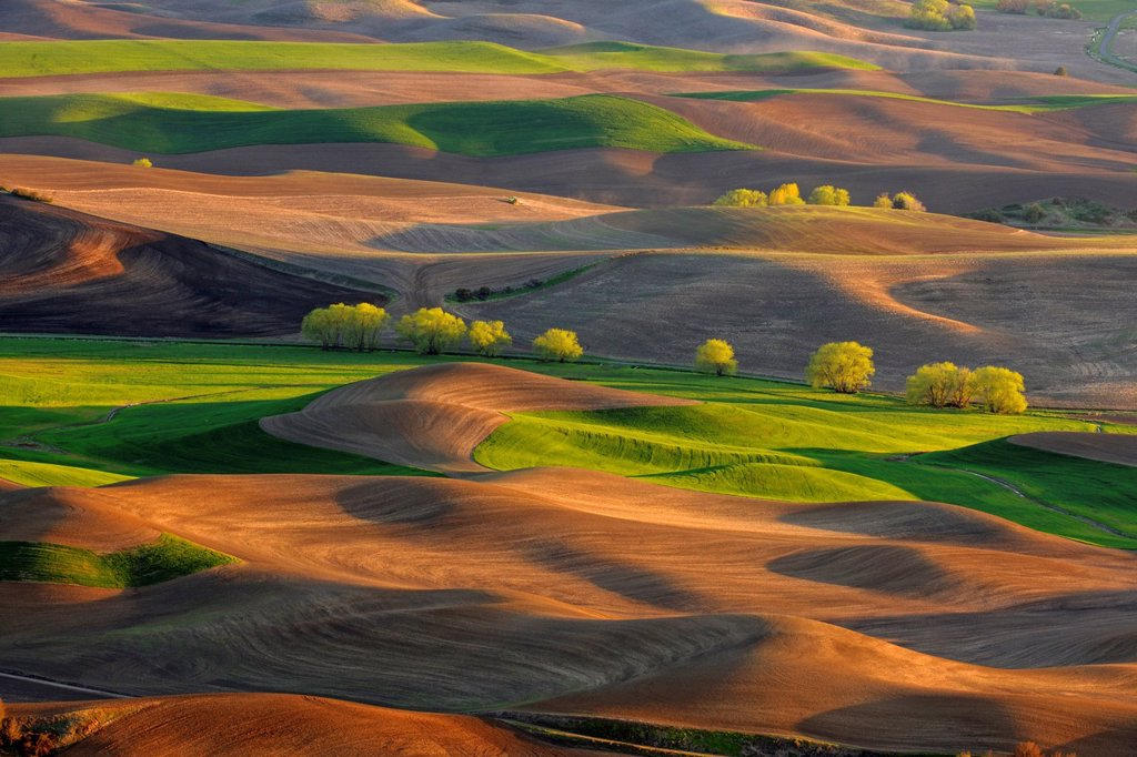 Stock Photo: 1990-60943 Palouse farmland in evening light in springtime, Palouse, Washington, USA