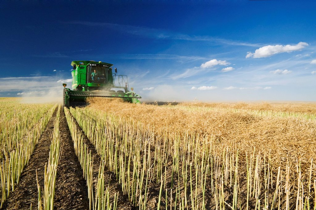 Stock Photo: 1990-60983 canola harvest near Hodgeville, Saskatchewan, Canada