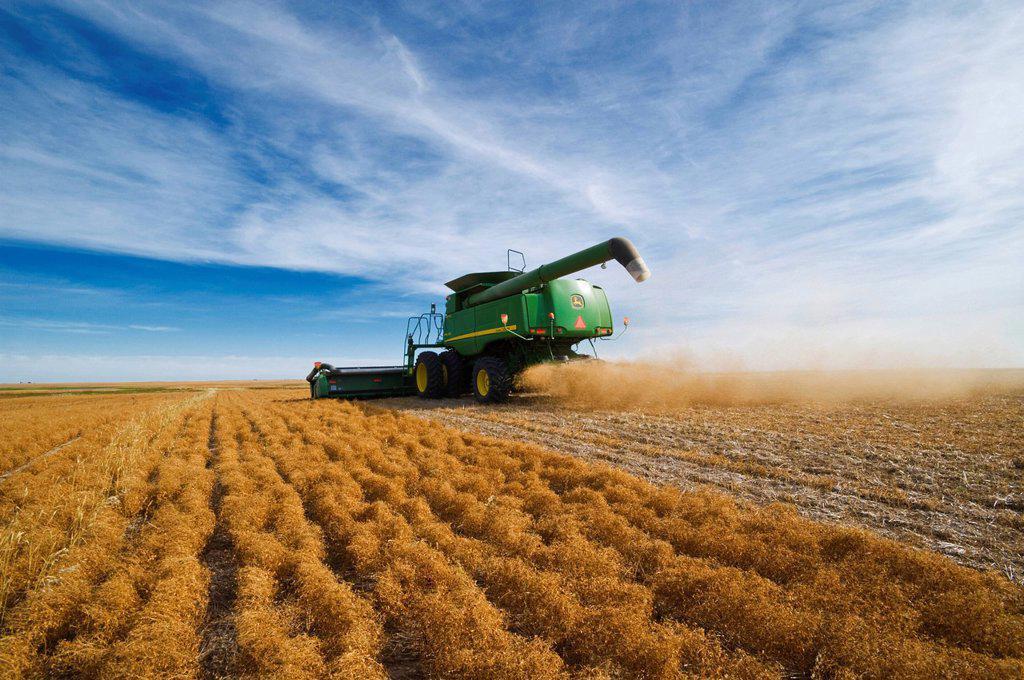 Stock Photo: 1990-61206 a combine harvests lentils near Congress, Saskatchewan, Canada