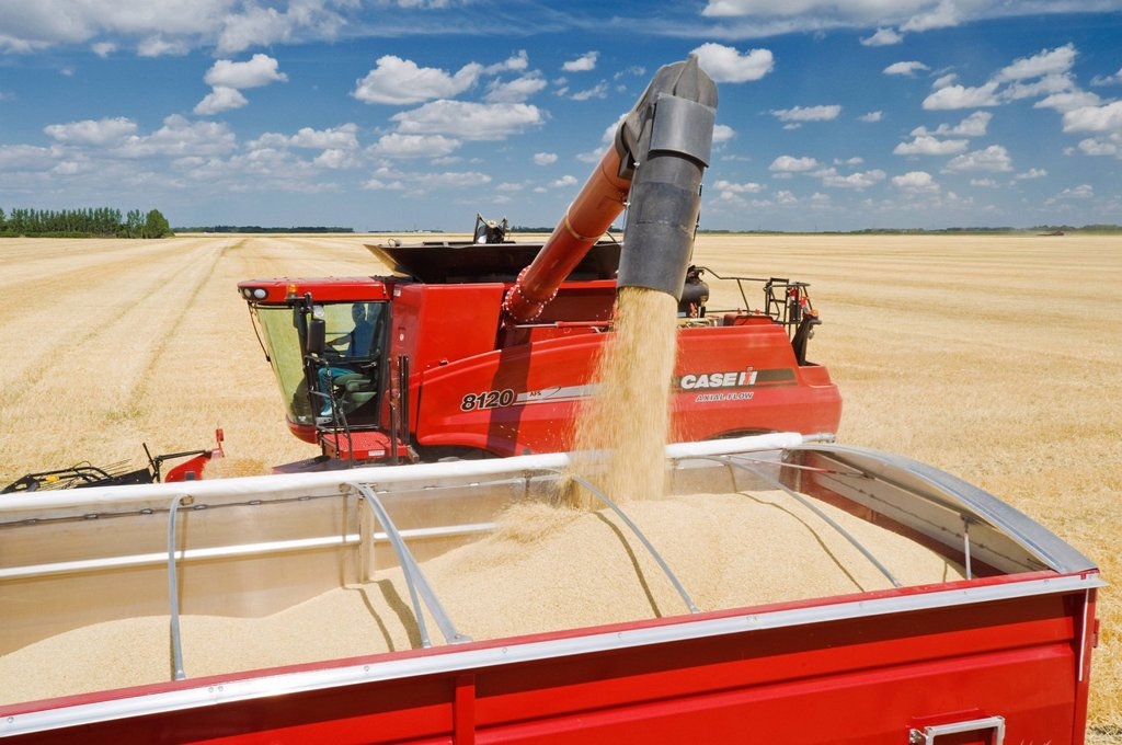 Stock Photo: 1990-61235 a combine augers barley into a farm truck during the harvest, near Dugald, Manitoba, Canada