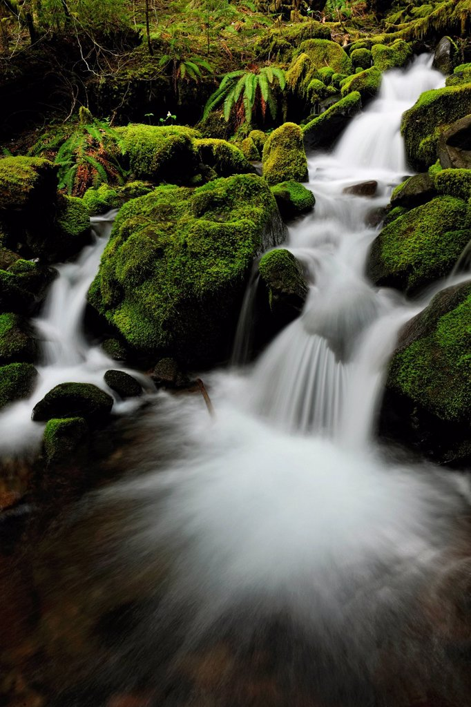 Stock Photo: 1990-61356 Waterfalls and mossy cascades in a stream along the trail to Sol Duc Falls, Olympic National Park, Washington, USA