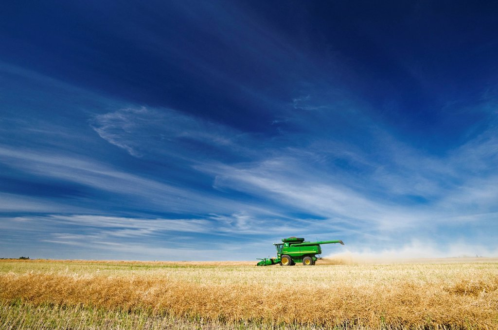 Stock Photo: 1990-61363 a combine harvester works in a canola field, near Kamsack, Saskatchewan, Canada