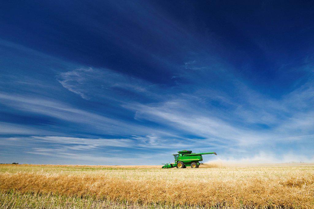 a combine harvester works in a canola field, near Kamsack, Saskatchewan, Canada : Stock Photo