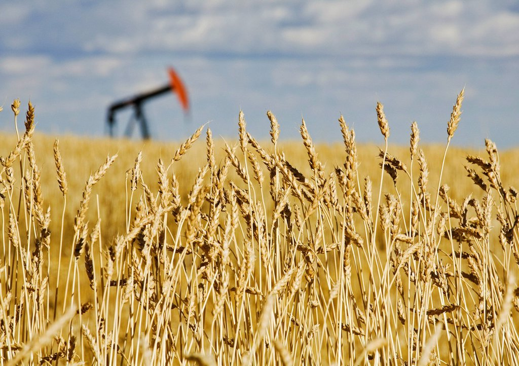 Pump jack in wheat field, near Carstairs, Alberta, Canada. : Stock Photo