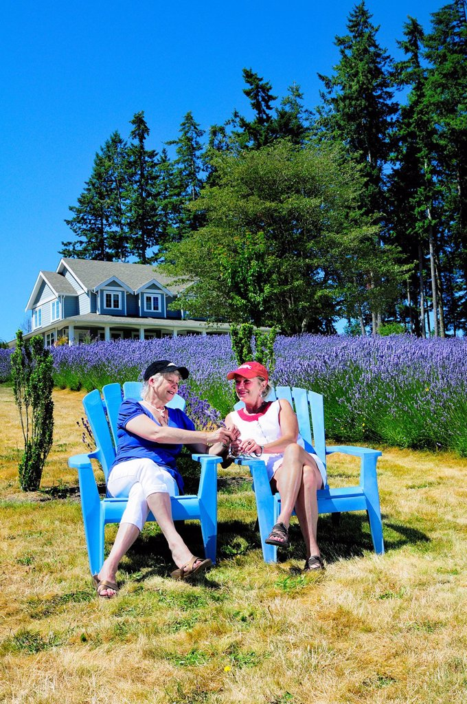 Stock Photo: 1990-61882 Marcella Hewco on the left _ model release and Louise Haleschuk on the right _ model release sitting in chairs holding freshly picked lavender from a field of lavender at Damali Lavender Farm and Bed and Breakfast in Cobble Hill, British Columbia, Canada.