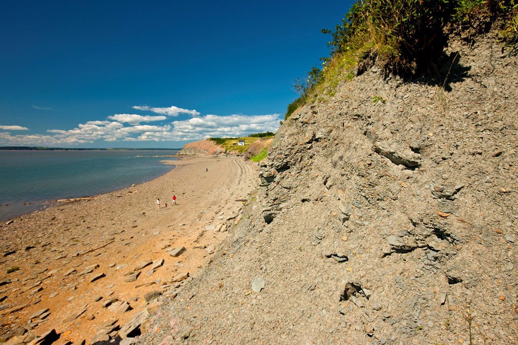 Joggins Fossil cliffs, Bay of Fundy, Nova Scotia, Canada : Stock Photo