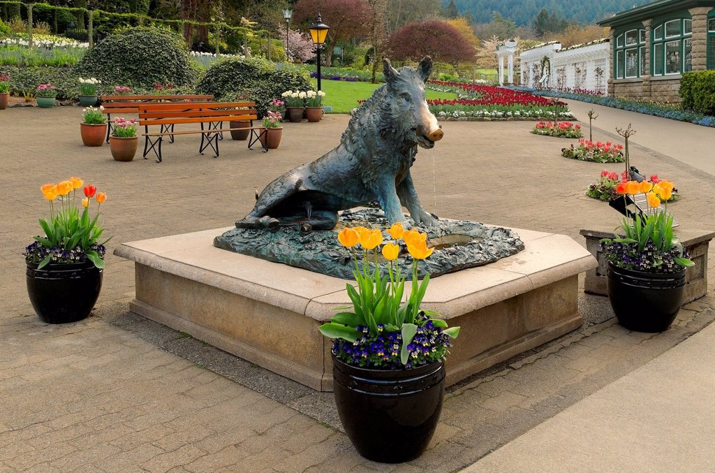 The wild boar statue, ´Tacca´ Butchart Gardens, Brentwood Bay, Vancouver Island, British Columbia, Canada : Stock Photo