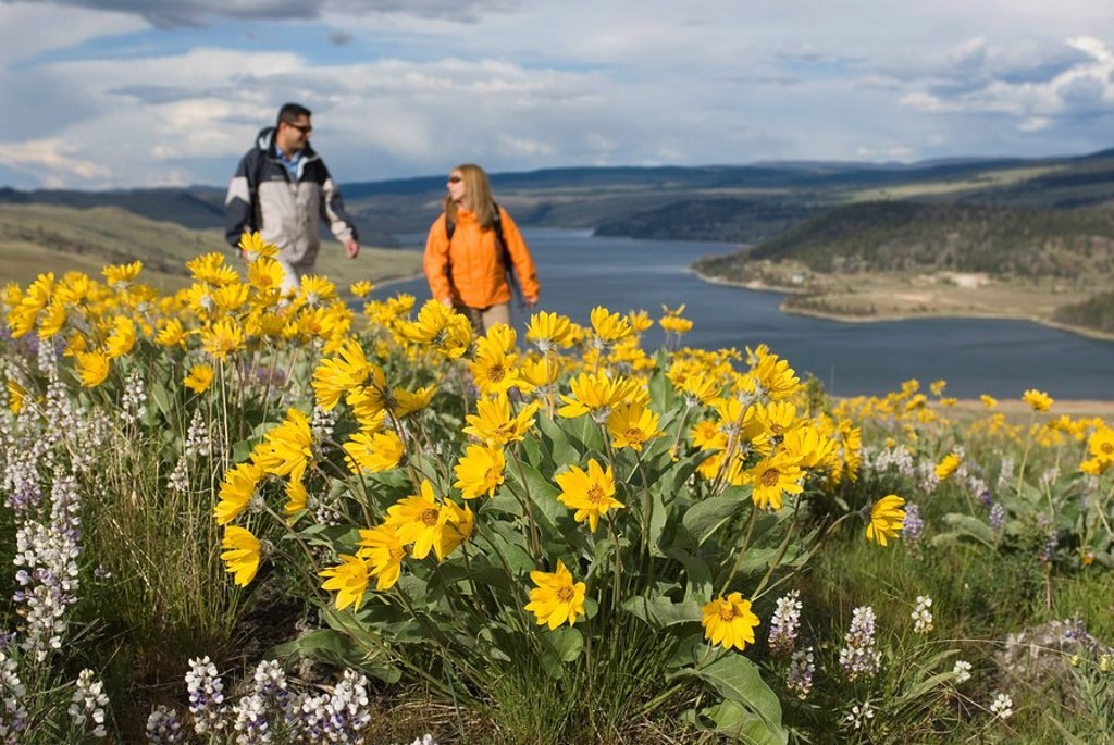 A young couple chats while hiking through spring wildflowers, as Stump Lake forms the background South of Kamloops, British Columbia, Canada : Stock Photo