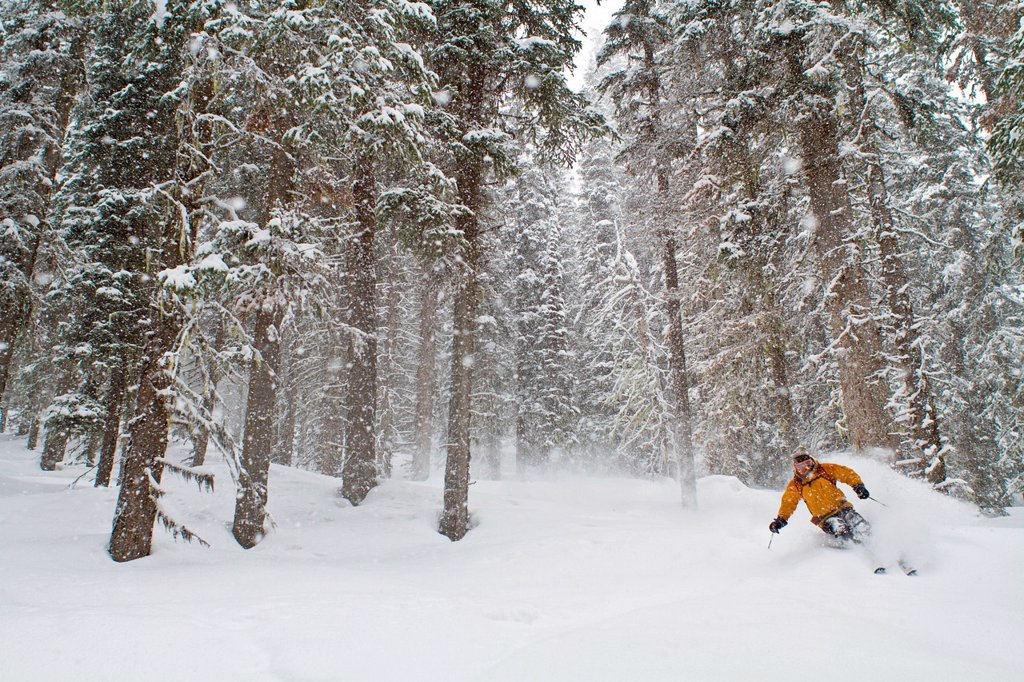 Stock Photo: 1990-66966 A male backcountry skier enjoying peaceful deep turns in the forest. Icefall Lodge, Golden, BC
