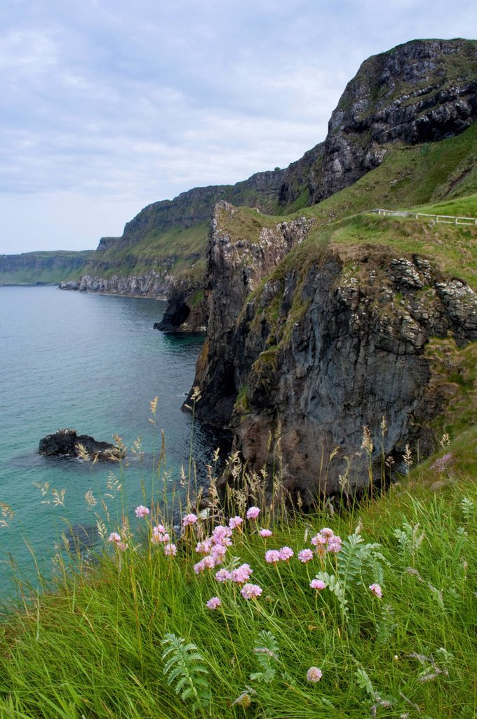 Stock Photo: 1990-68355 Carrickarede Isle, County Antrim, Northern Ireland
