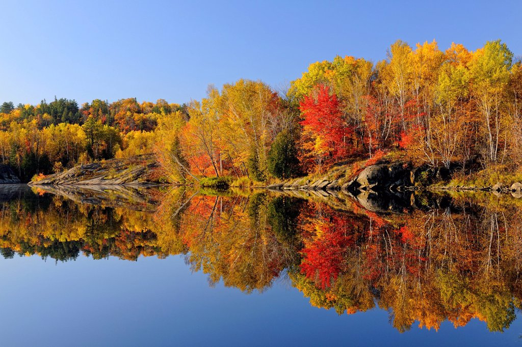 Stock Photo: 1990-70873 Autumn maples and birches reflected in Simon Lake, Greater Sudbury Naughton, Ontario, Canada