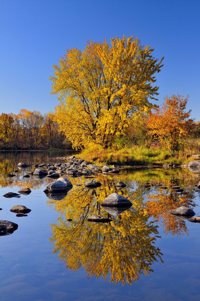 Stock Photo: 1990-70886 A mature autumn sugar maple reflected in the Vermilion River, Greater Sudbury Whitefish, Ontario, Canada