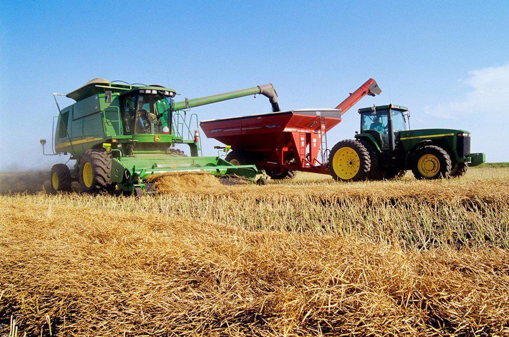 canola harvest near Somerset, Manitoba, Canada : Stock Photo