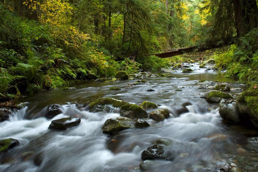 Goldstream Park, Vancouver Island, British Columbia, Canada : Stock Photo