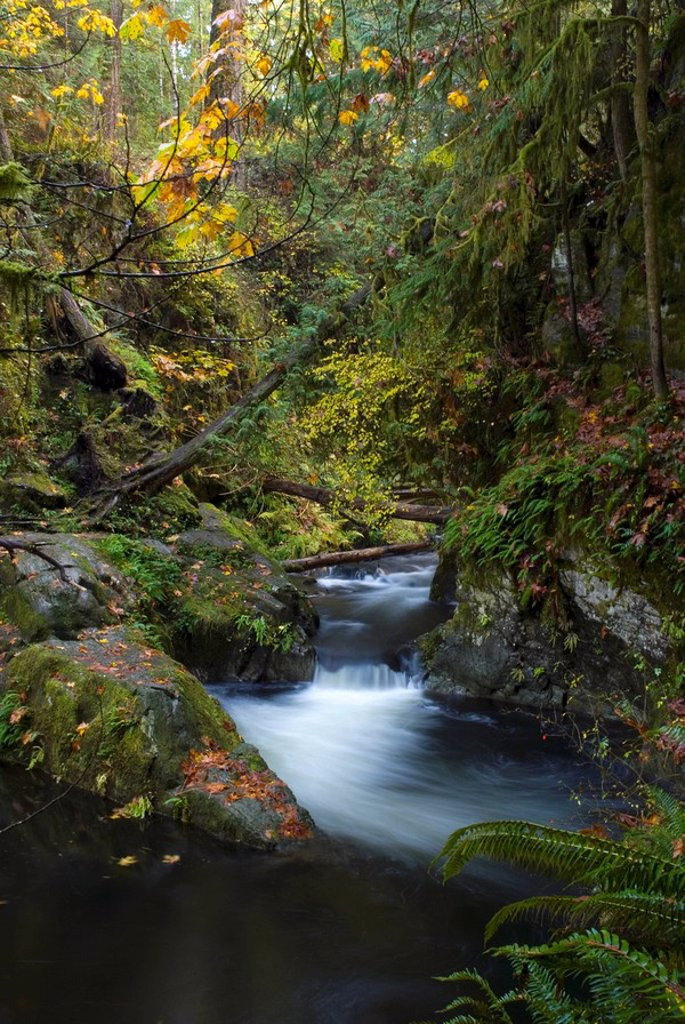 Goldstream Park, Vancouver Island, British Columbia, Canada : Stock Photo