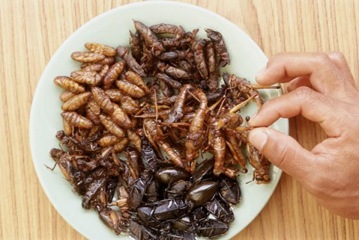 Edible Fried Bugs