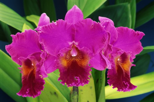 Stock Photo: 2003-1294 Orchids