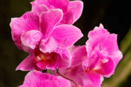 Stock Photo: 2003-1342 Orchids