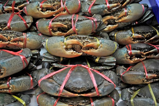 Live crabs with claws tied to prevent injury at a market stall, Bangkok, Thailand : Stock Photo
