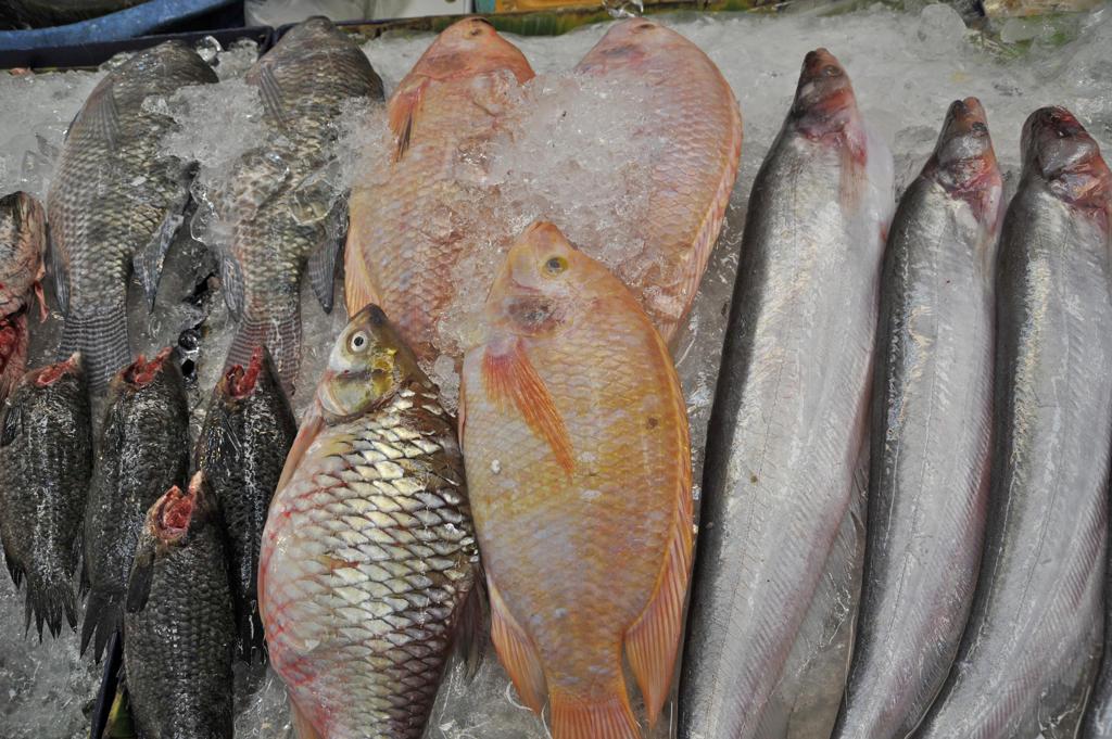 Fish on ice at a market stall, Bangkok, Thailand : Stock Photo