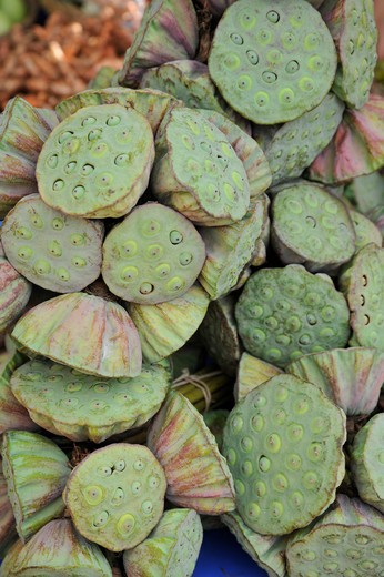 Stock Photo: 2003-602211 Close-up of Lotus (Nelumbo nucifera) pods at a market stall, Chatuchak Market, Bangkok, Thailand