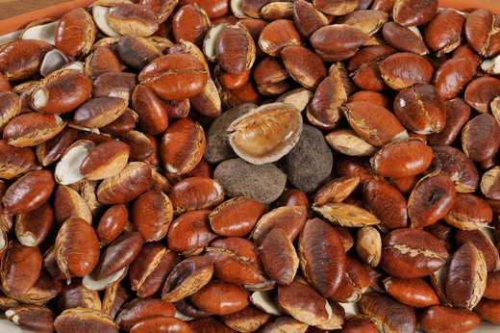 Close-up of fresh roasted seeds of krabok (Irvingia malayana) : Stock Photo