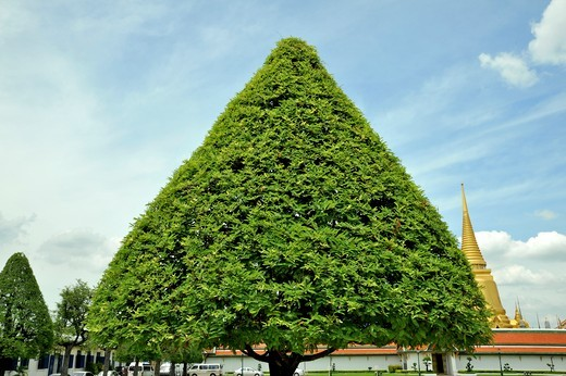 Tree in front of a temple, Wat Phra Kaeo, Grand Palace, Bangkok, Thailand : Stock Photo
