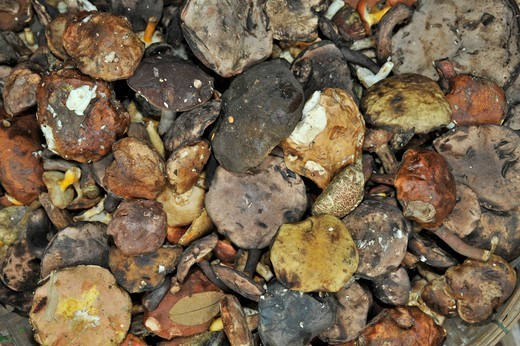 Stock Photo: 2003-602341 Close-up of dried mushrooms