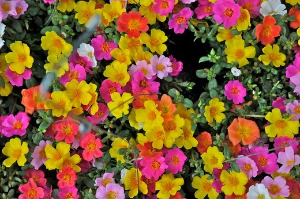 Close-up of flowers, Chatuchak Weekend Market, Bangkok, Thailand : Stock Photo