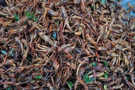 Thailand, Khon kaen, Fried Grasshoppers (locusts) are popular snack in Isan area : Stock Photo