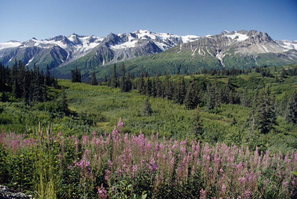 Stock Photo: 2005-1433B Takhinsha Mountains Alaska USA