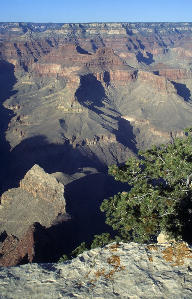 Grand Canyon National Park  Arizona USA : Stock Photo
