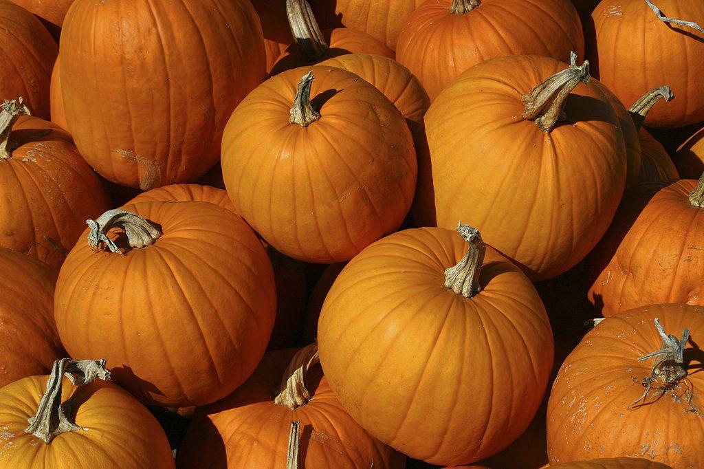 Stock Photo: 2005-2091 Close-up of a heap of pumpkins