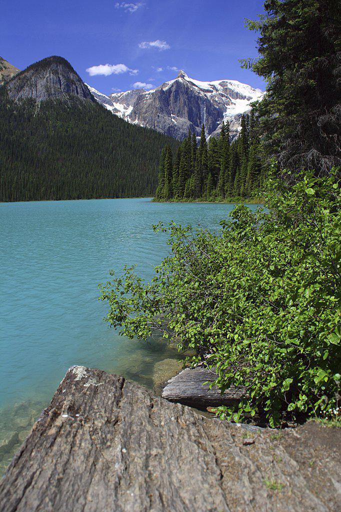 Trees along the lakeside, Emerald Lake, Yoho National Park, British Columbia, Canada : Stock Photo