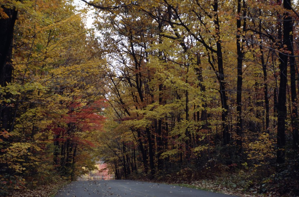 Road passing through a forest, Delaware Water Gap National Recreation Area, Pennsylvania, USA : Stock Photo