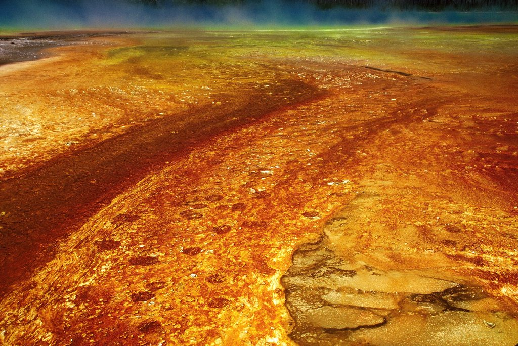 Bacteria mat of the Grand Prismatic Spring, Yellowstone National Park, Wyoming, USA : Stock Photo