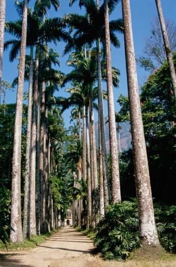 Botanical Gardens Rio de Janeiro Brazil : Stock Photo